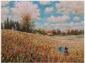V poli vlčích makov / In the wild poppies field