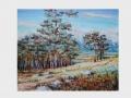 Pri borovicovom lesíku / At a pine tree woodlet